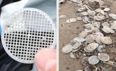 AREA MARINA PUNTA CAMPANELLA: ALLARME DISCHETTI DI PLASTICA