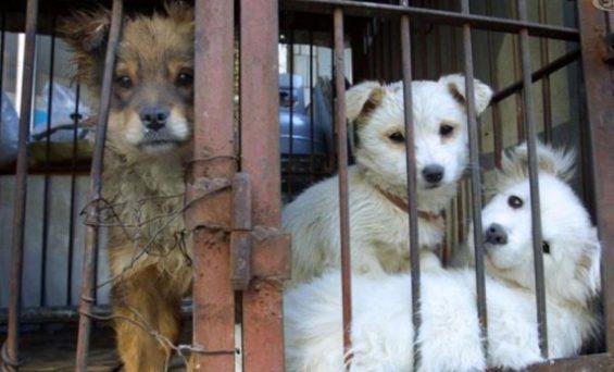 CAMPANIA – IN AUMENTANO CRIMINI CONTRO GLI ANIMALI, ECCO IL RAPPORTO ZOOMAFIA 2018