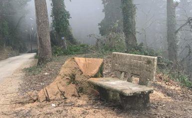 SOS ALBERI DEL FAITO: STRAGE DI FINE D'ANNO.