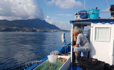 """BLU FISH 2019: LA REGIONE CAMPANIA PROMUOVE IL """"PESCE POVERO"""""""