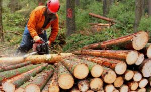 DEROGHE REGIONALI AL TAGLIO DEL  BOSCO CEDUO: IL NO DEL WWF